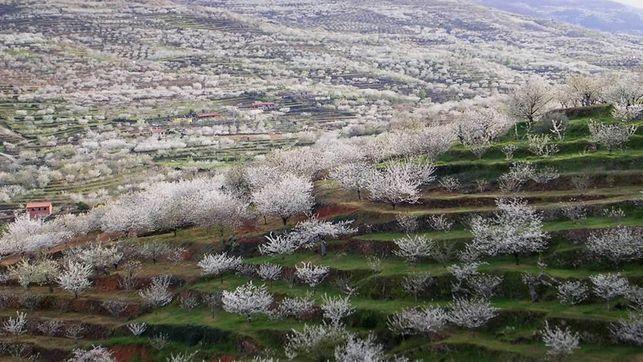 Cerezo-flor-Valle-Jerte-httpwwwturismovalledeljertecom_EDIIMA20150305_0882_13