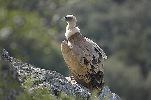 aves monfrague