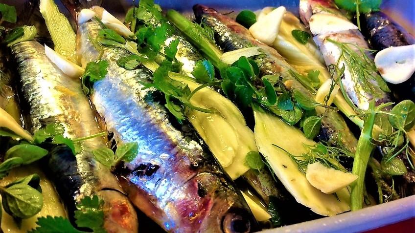 sardinas griegas con hinojo y cilantro