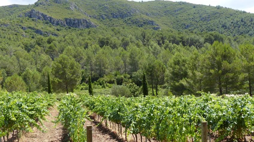 can marles paisajes de vinos