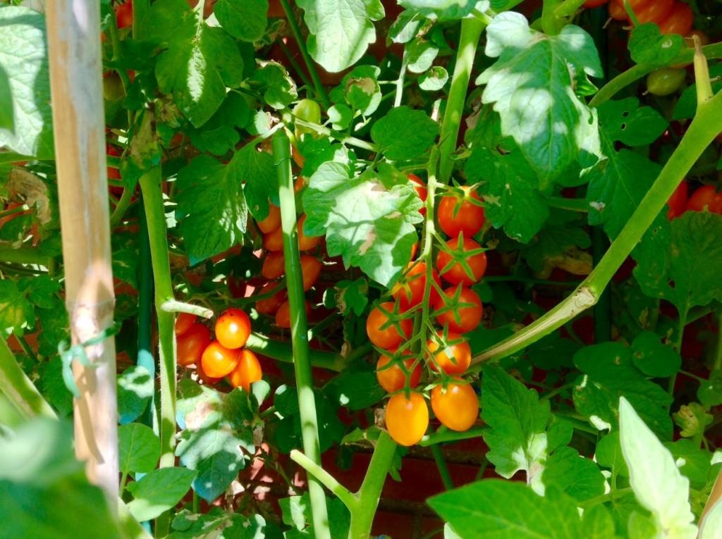 cherrys naranjas