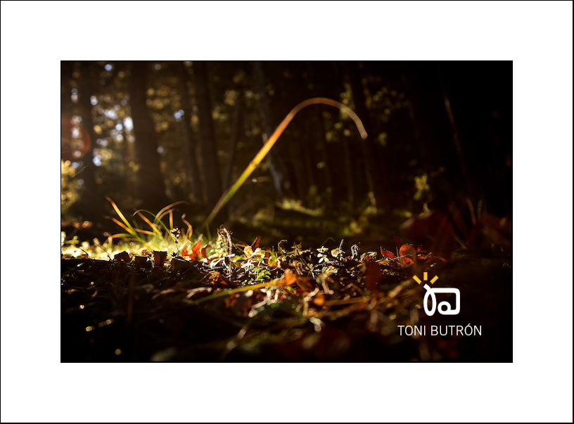 otoño bosque toñin