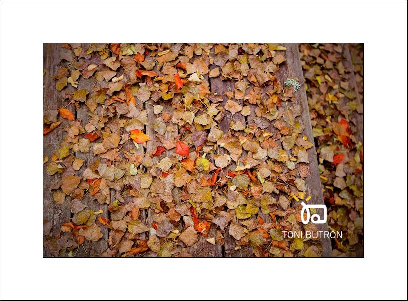 otoño hojas toñín
