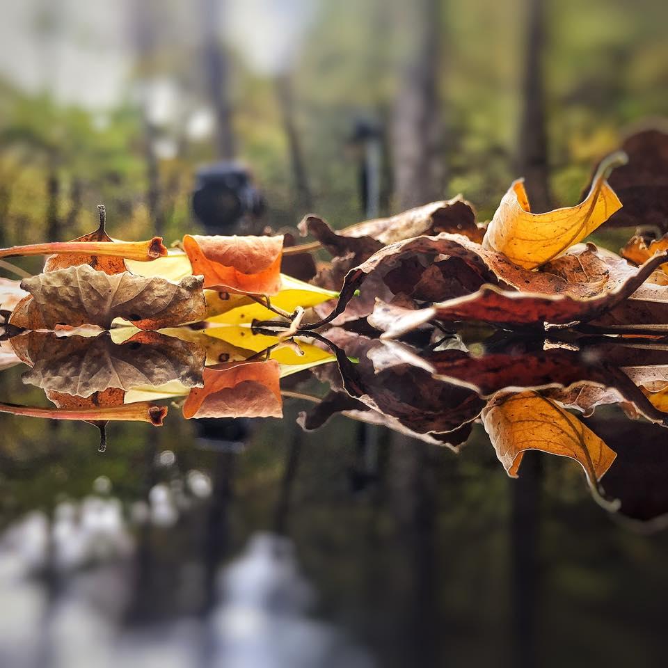 otoño Toñín