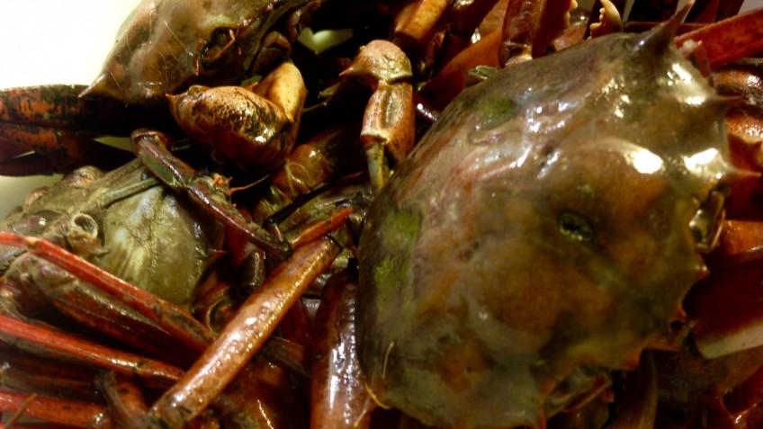 cangrejos 1