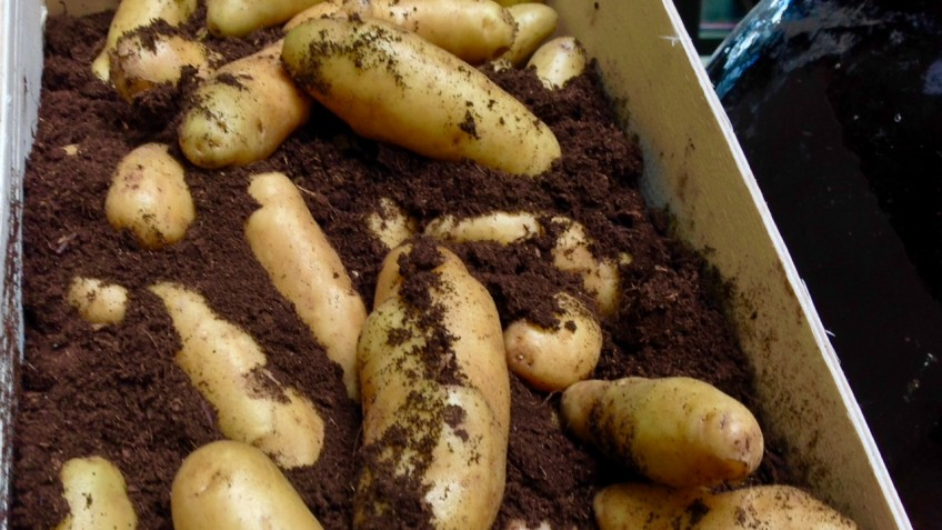 patatas raclette