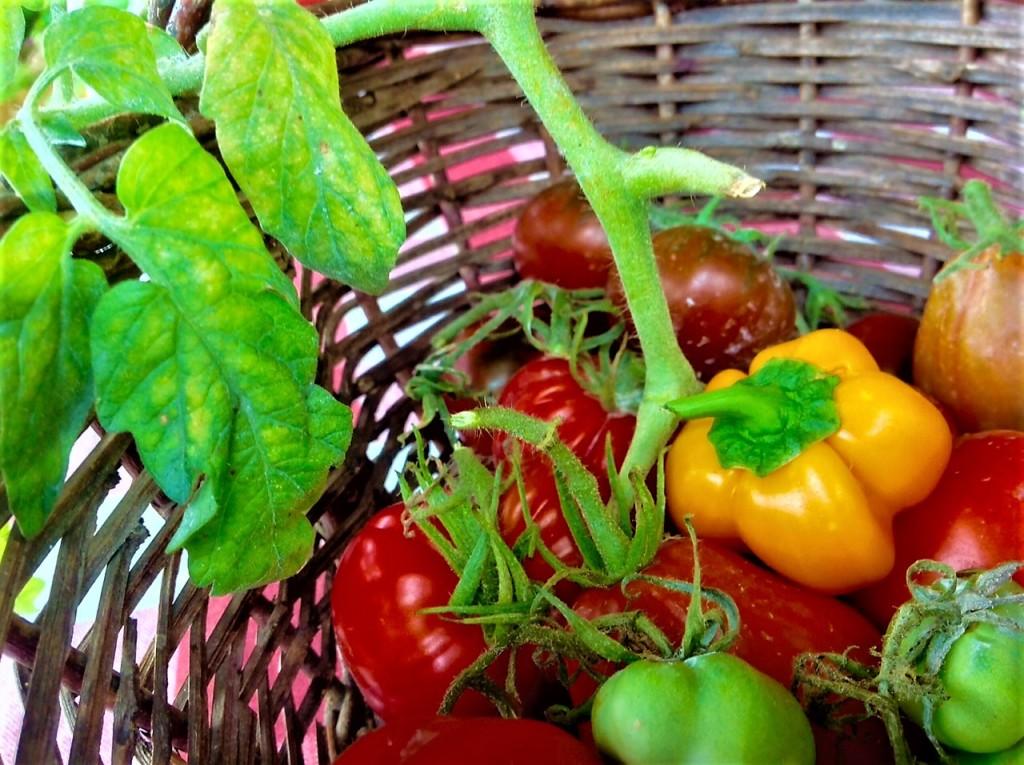 salsa ultimos tomates