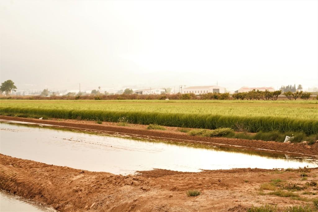 arrozales del delta