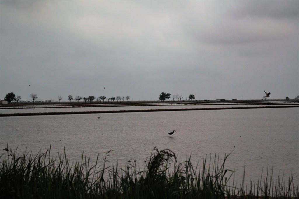delta aves