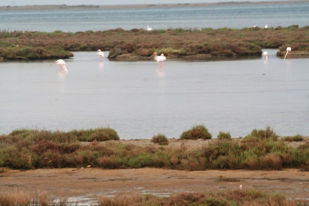 flamencos del delta