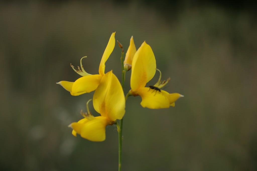 flor y su insecto