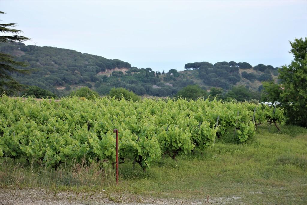 viñas y serralada