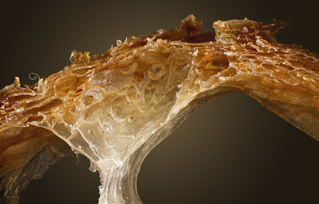 Bread Crumb macros_V4_ZereneStack_IMG_0008_C