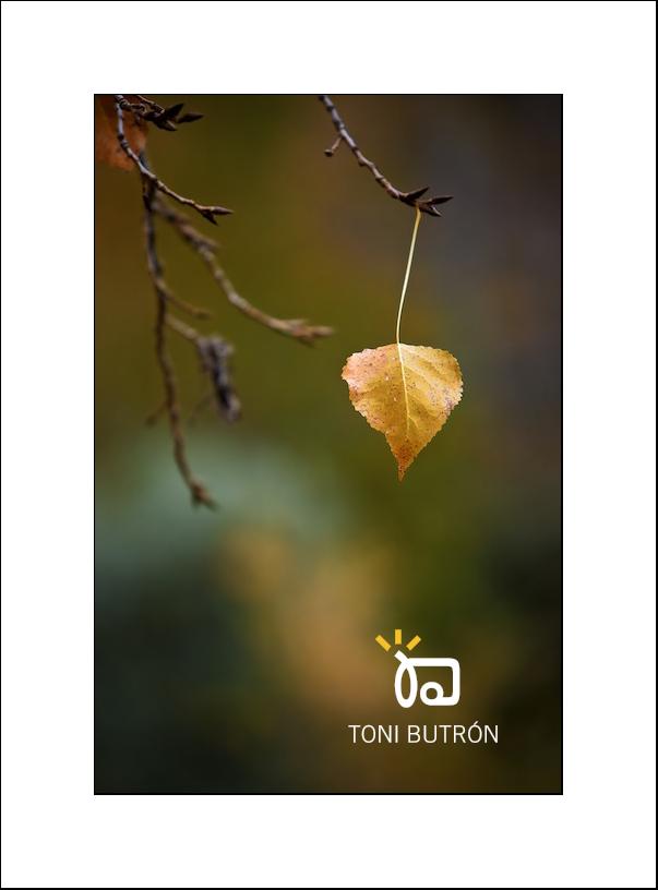 otoño hoja suelta Toñín