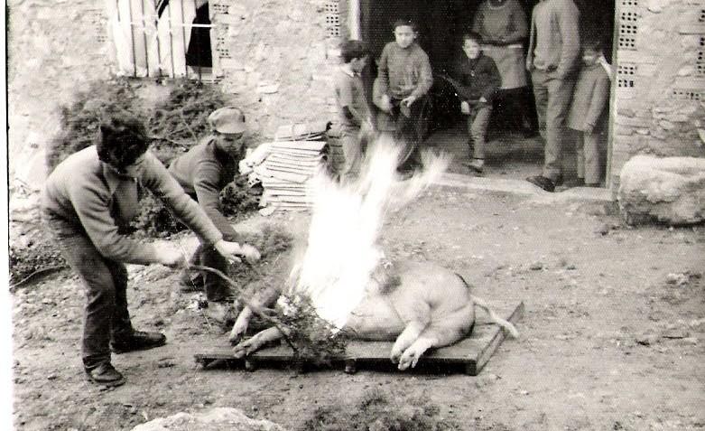 Matanza cerdo 1